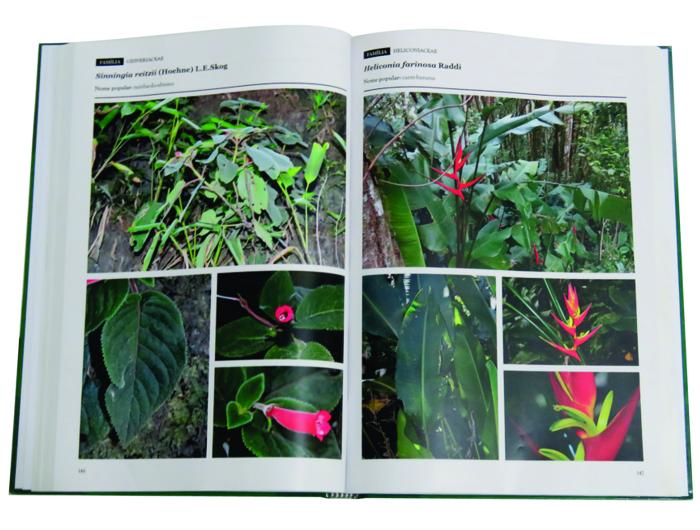 Imagem do livro aberto